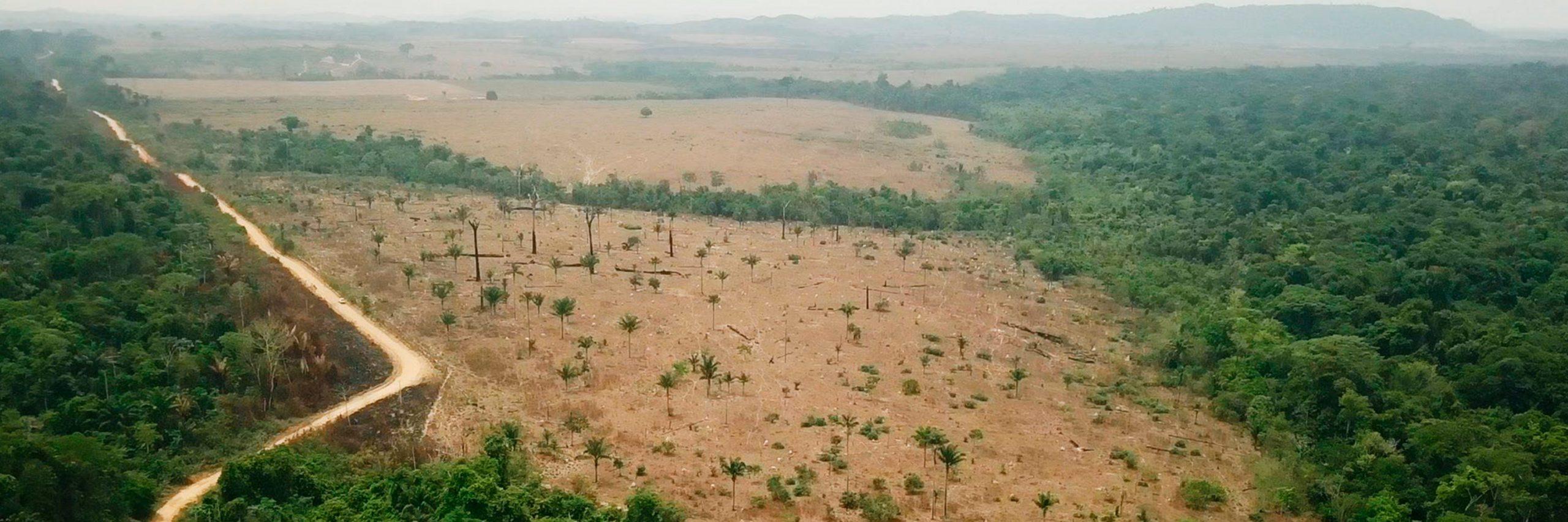 Deforestación en Amazonas