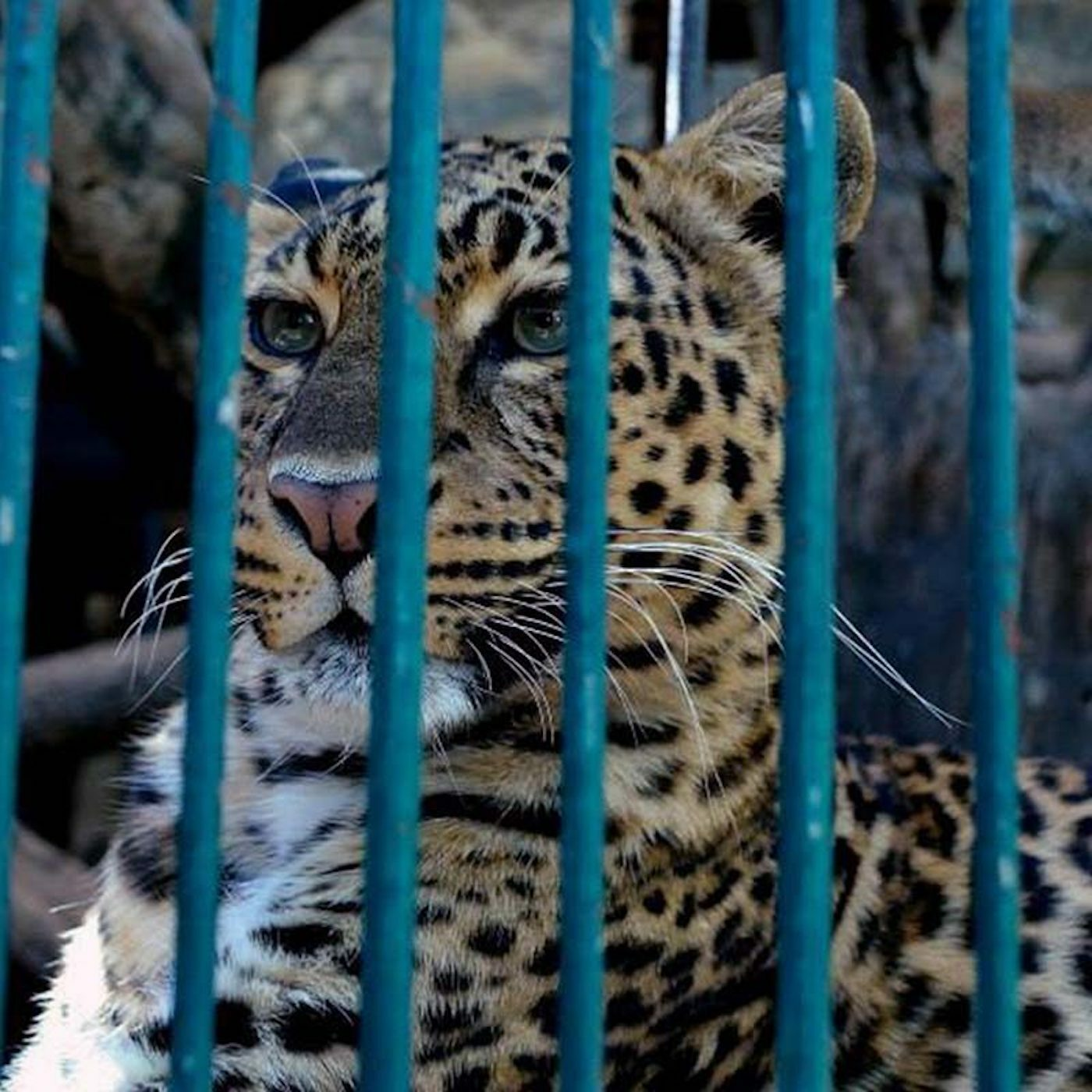 ESCALOFRIANTE ZOOLOGICO CLUB DE LOS ANIMALITOS